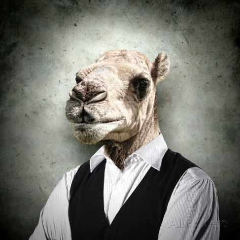 Funny Camel In Businessman Suit