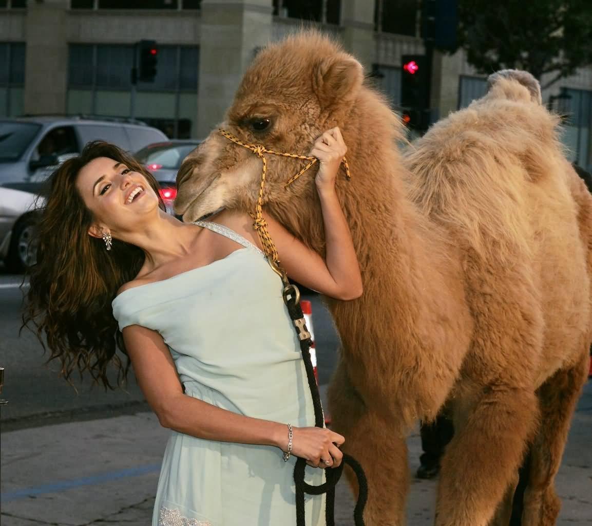Funny Camel Kissing Penelope Cruz