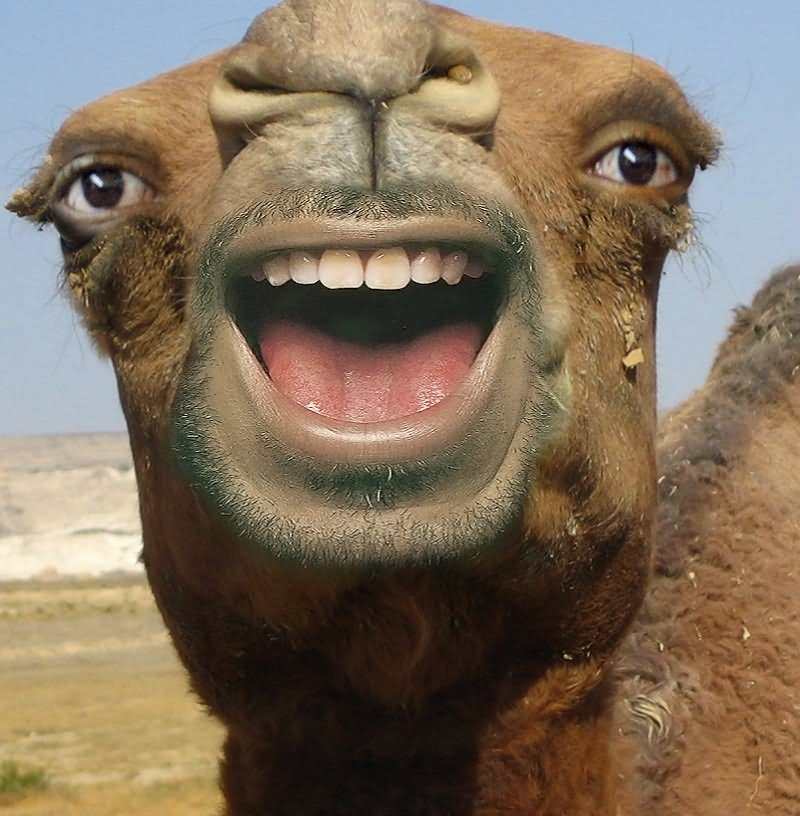 Funny Camel With Man Lips Smiley Face