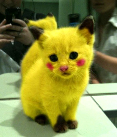 Funny-Cat-In-Yallow-Color.jpg