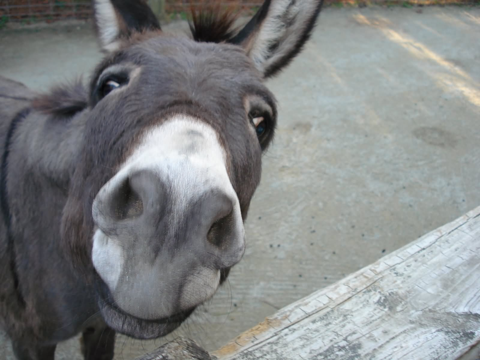 funny donkey faces - photo #9