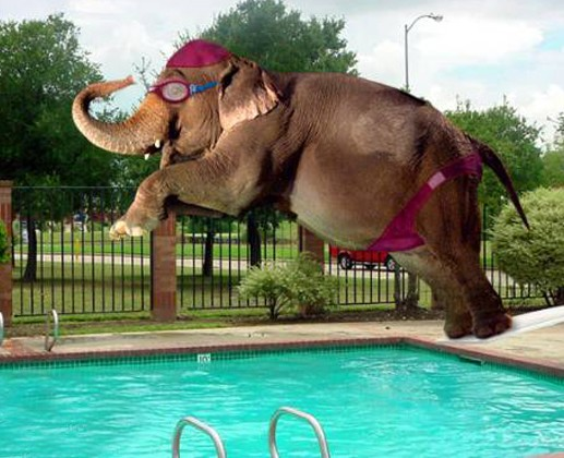 Funny Elephant Jumping In Swimming Pool