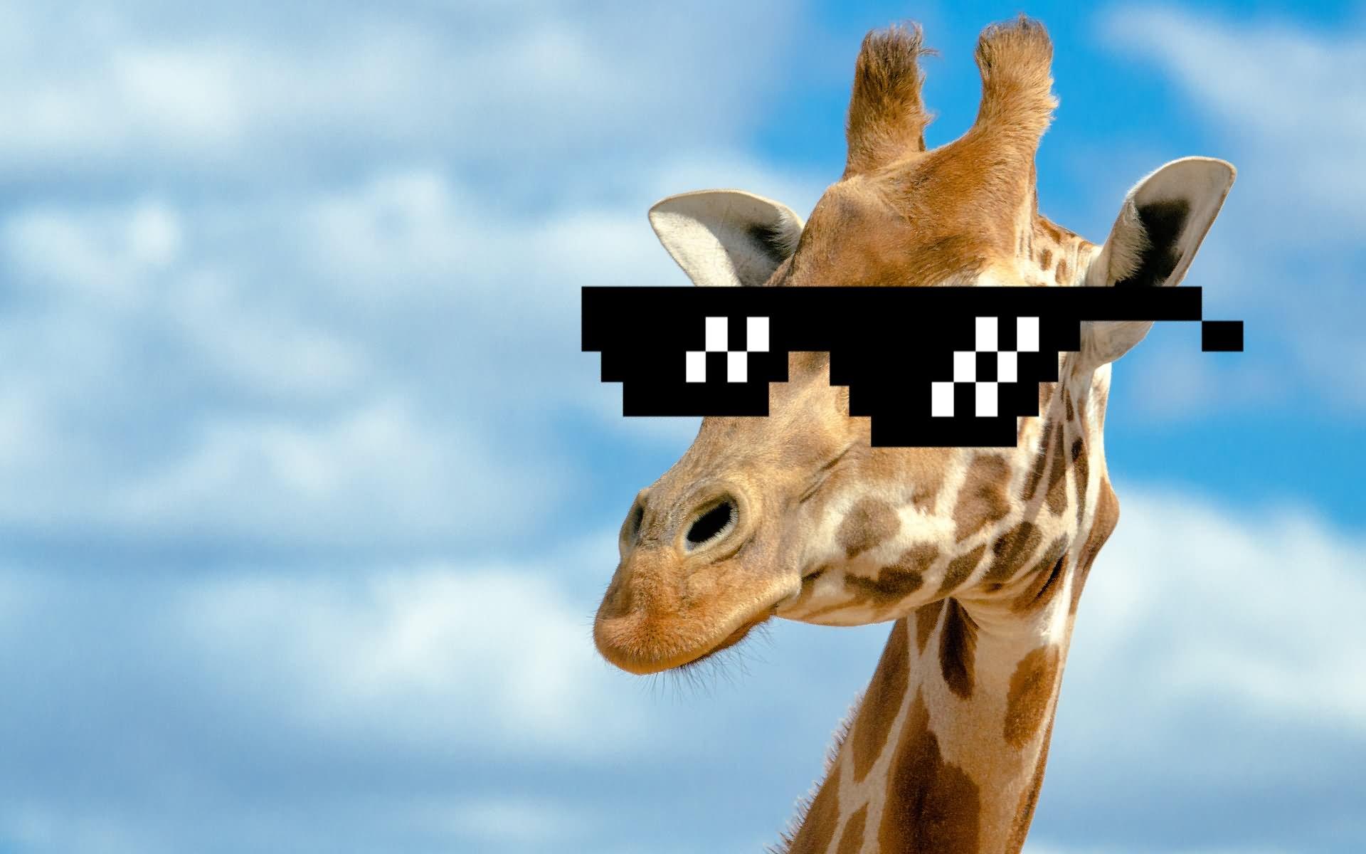 Funny Giraffe In Sunglasses
