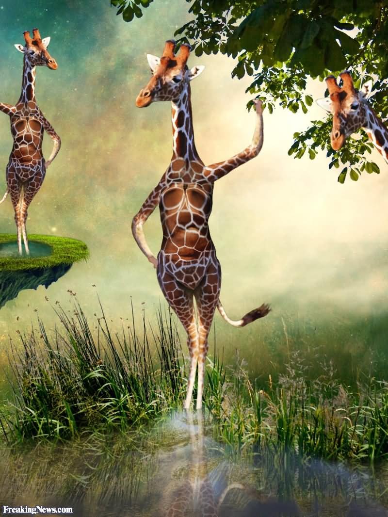 Funny girl giraffe cartoon