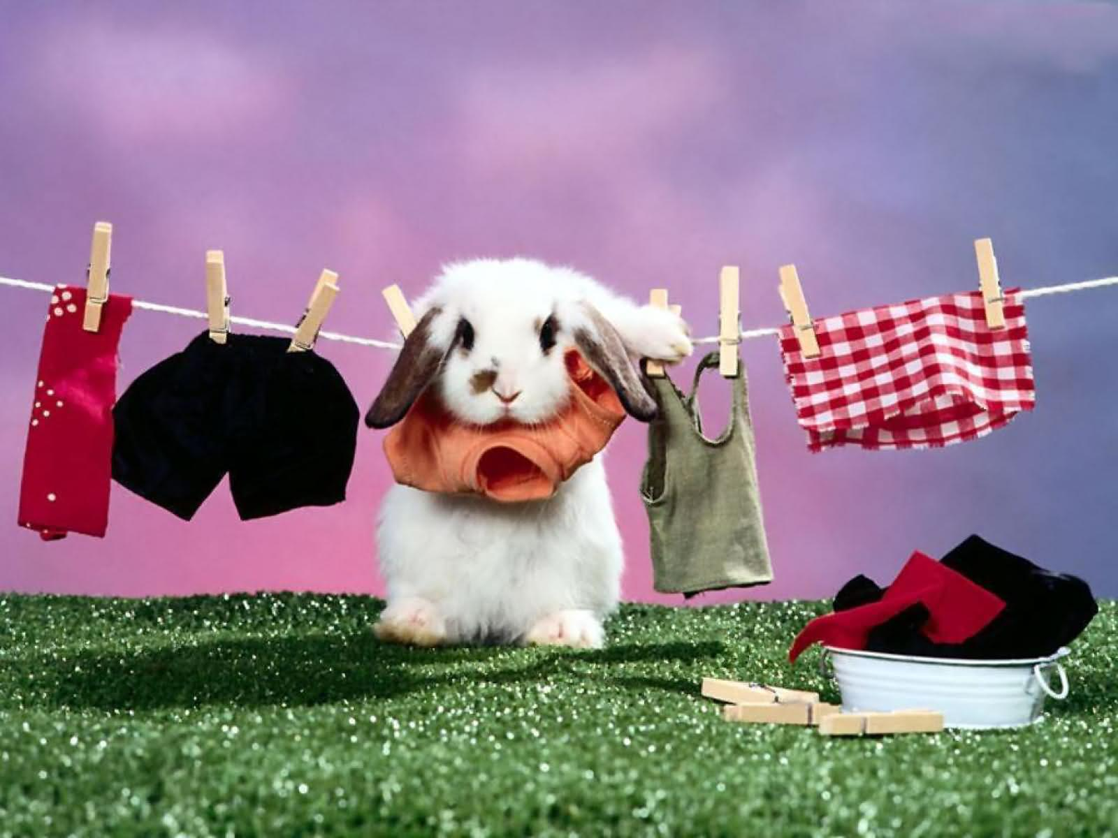 Funny rabbit funny rabbit pictures pictures of rabbits funny - Funny Rabbit Animated Picture