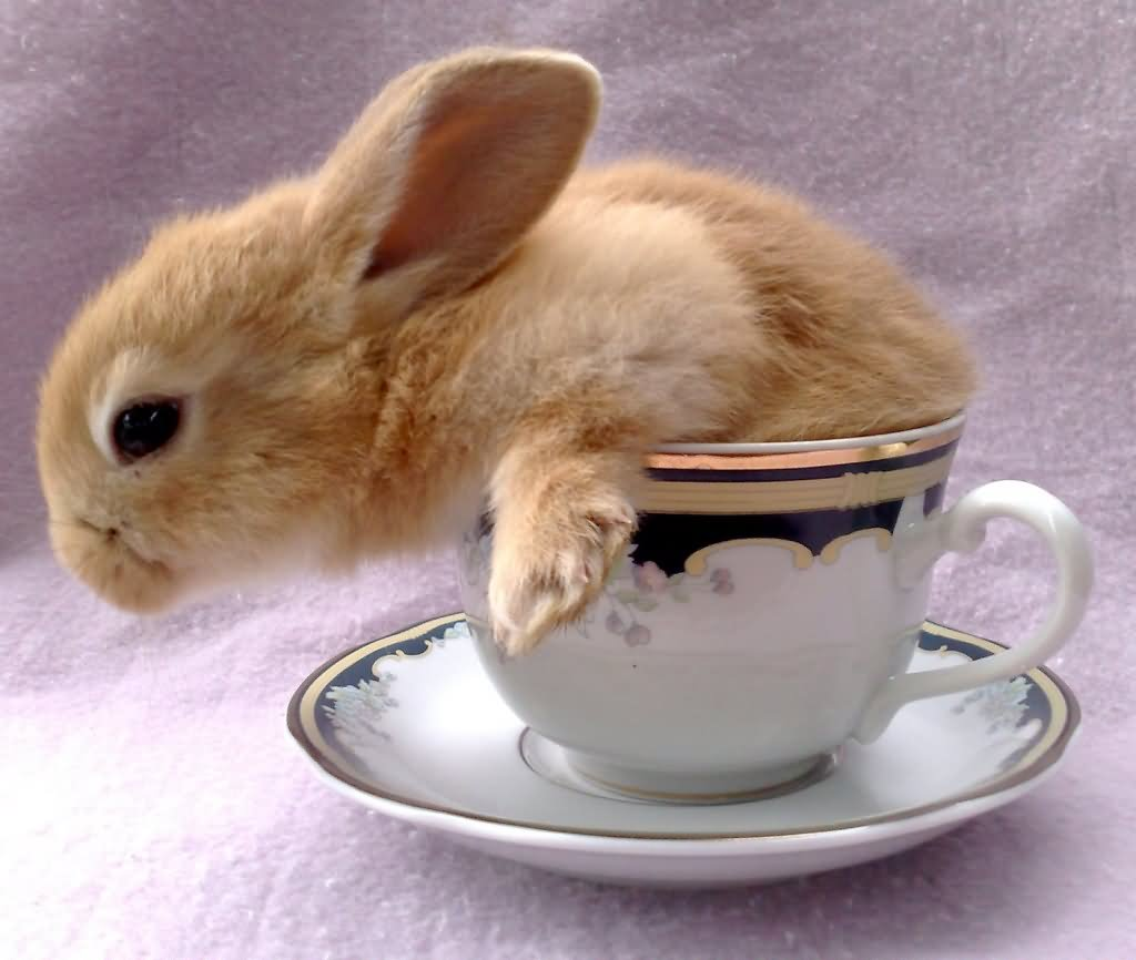 Funny rabbit funny rabbit pictures pictures of rabbits funny - Funny Rabbit In Cup