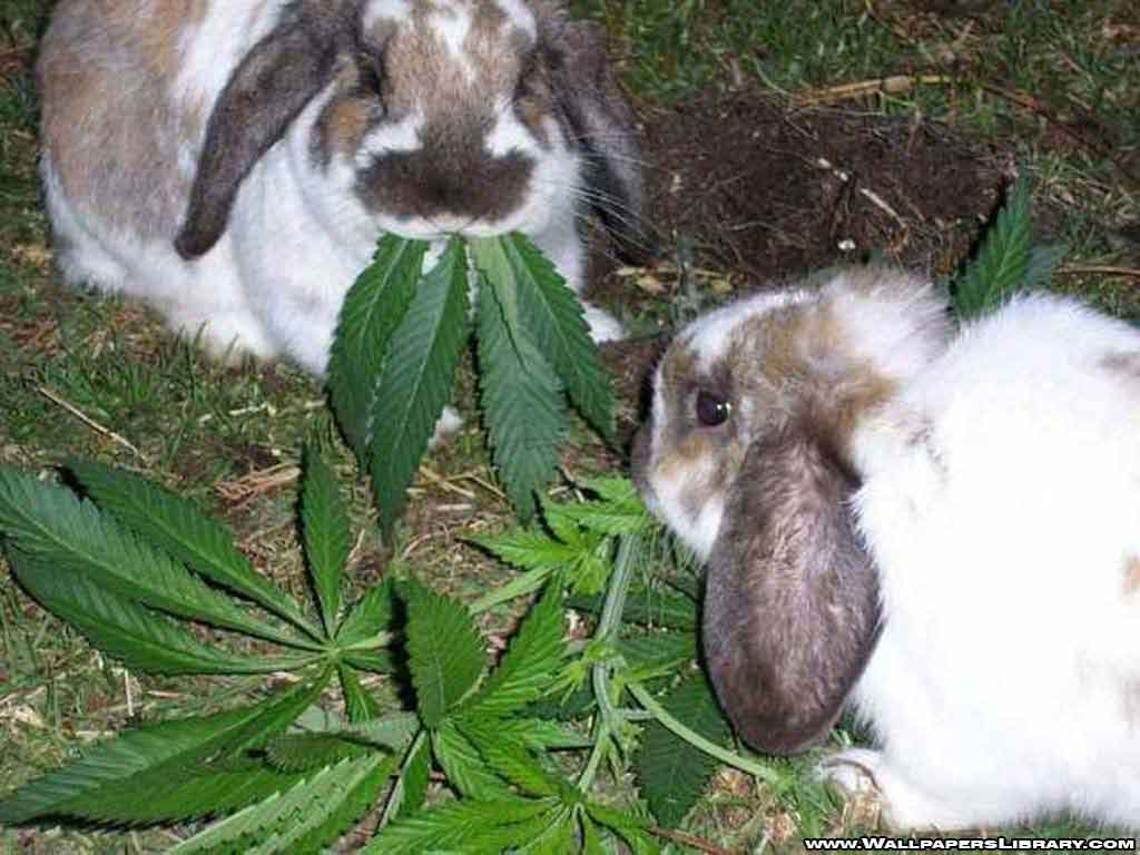 Funny rabbit funny rabbit pictures pictures of rabbits funny - Funny Rabbits Eating Leaves