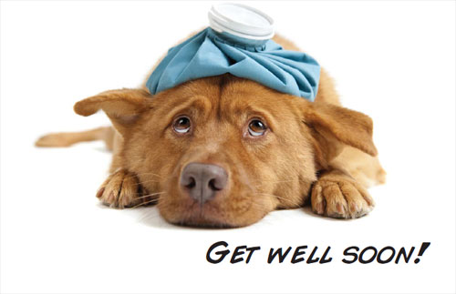 Image result for dog sending get well soon
