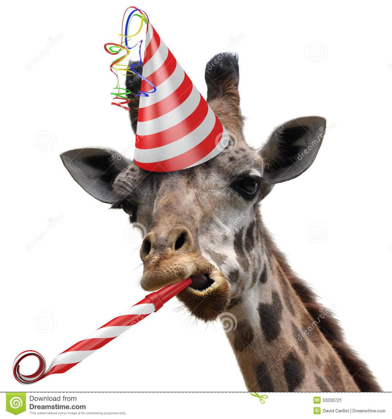 Animals in party hats - photo 19 d77ad1e09759