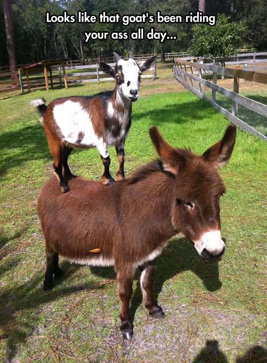 15 most funny donkey images