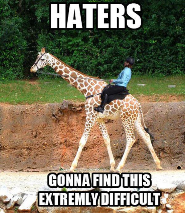 Giraffe Quotes Funny: Funny Giraffe Meme