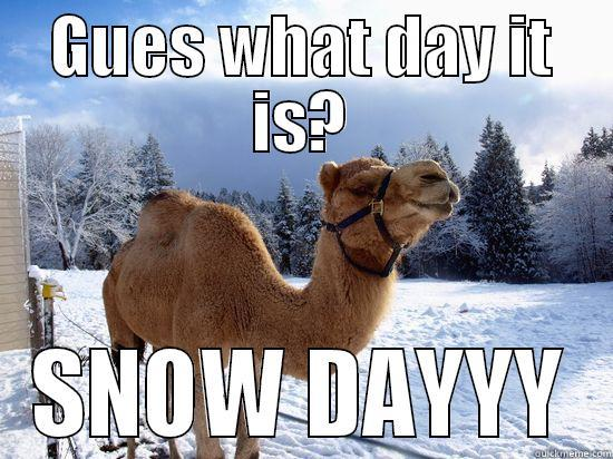 Funny Memes For Snow : Guess what day it is snow day funny meme