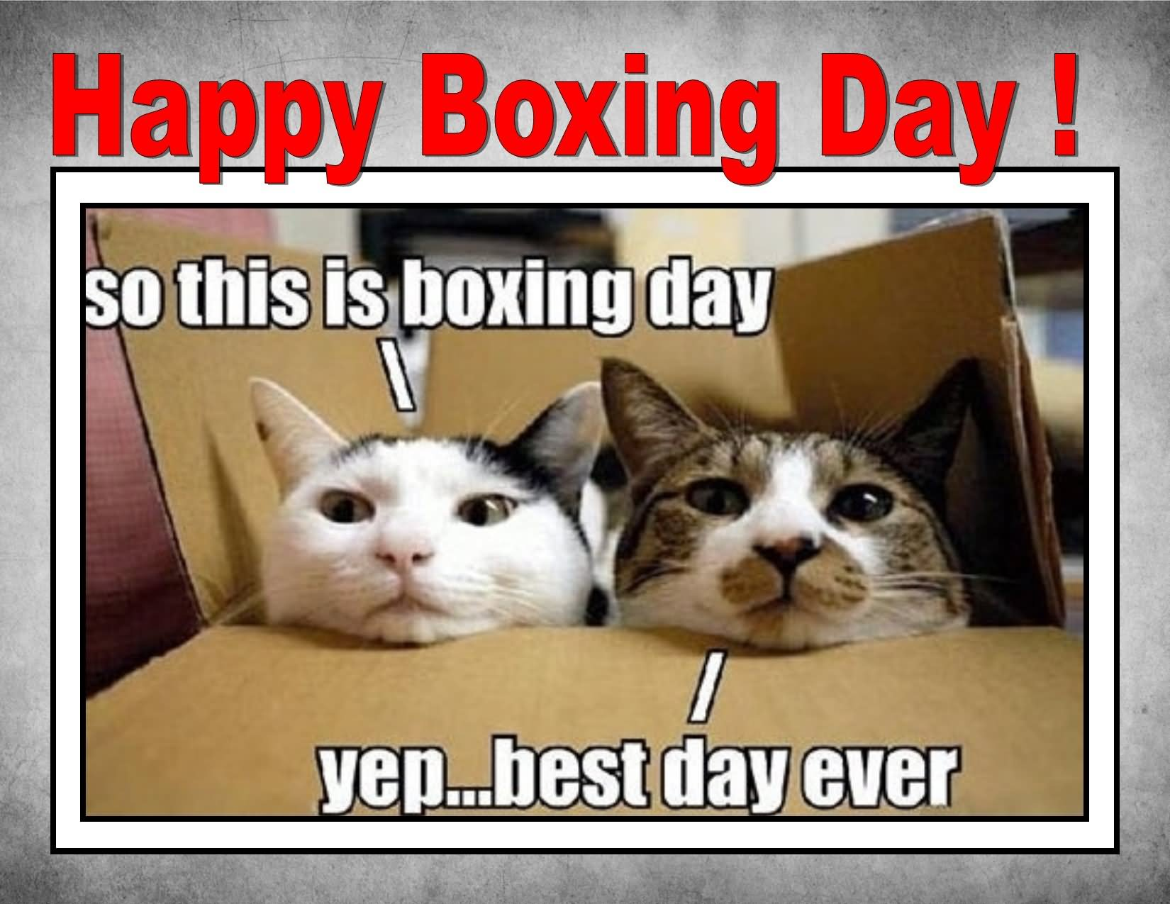 Happy Boxing Day Funny Cats Meme