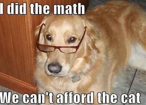 Funny Meme Pictures Of Dogs : I did the math we can't afford the cat funny meme