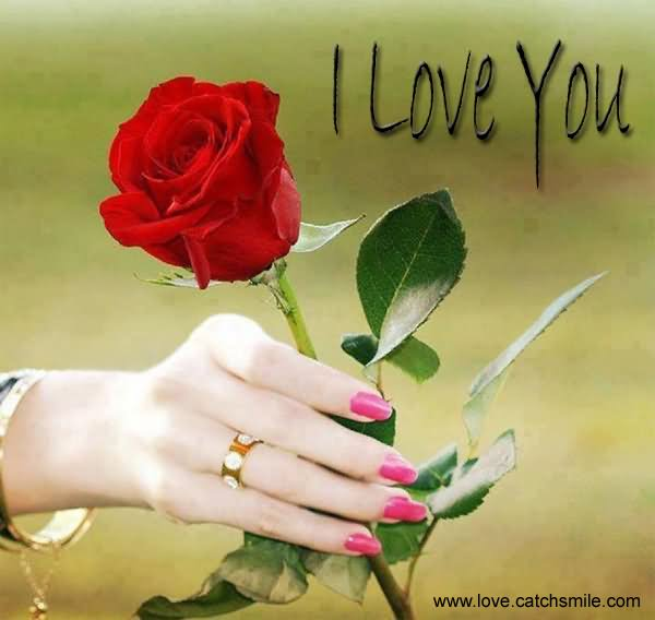 I Love You Rose Bud Picture