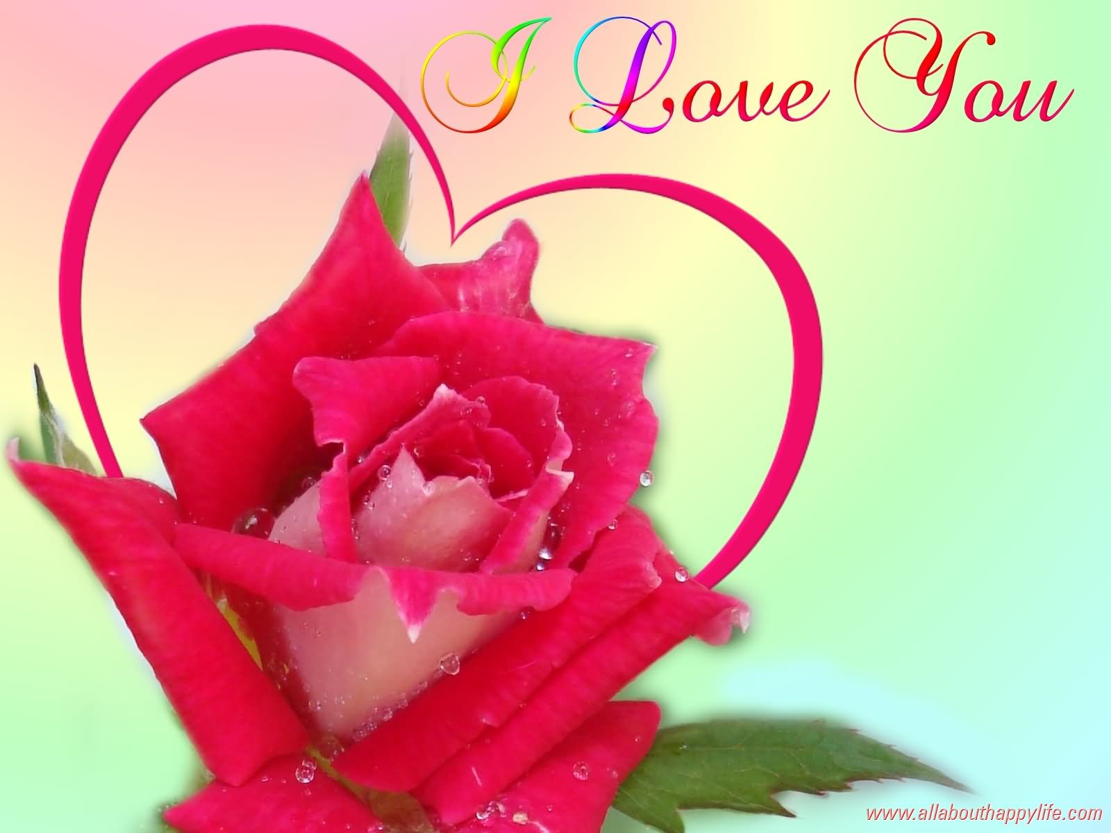 37 best love you forever images i love you rose picture buycottarizona Choice Image