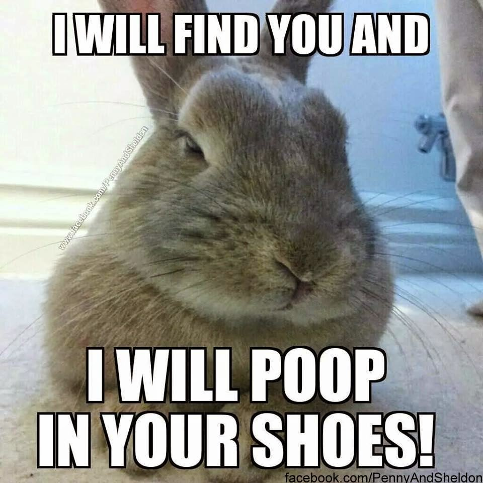 I Will Poop In Your Shoes Funny Bunny Meme