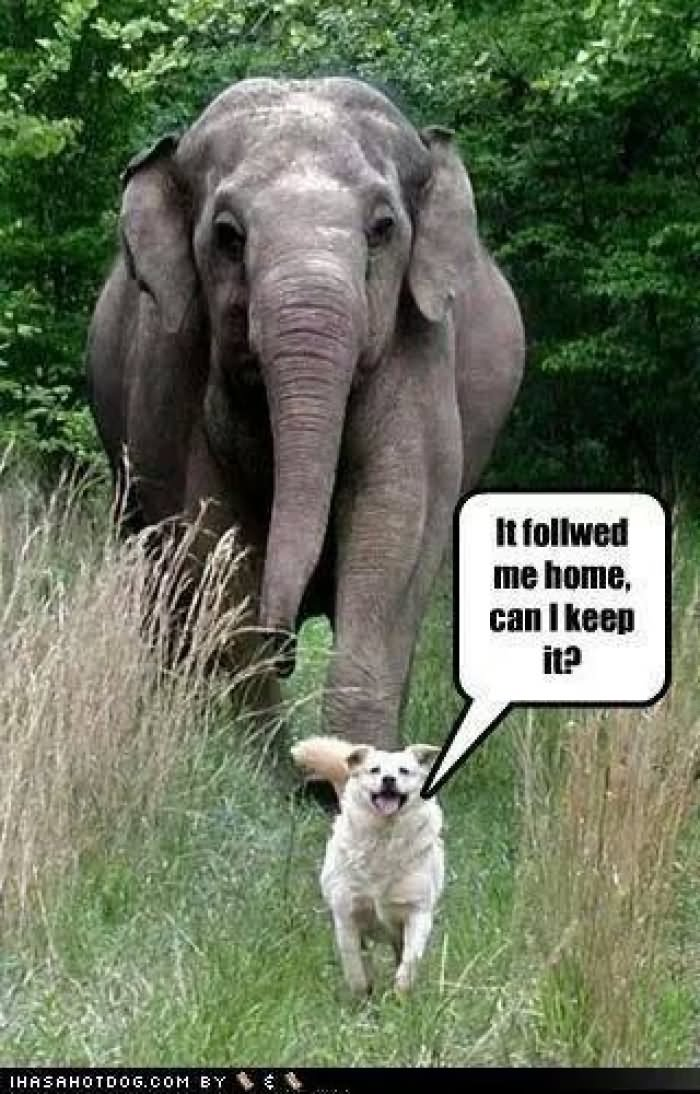 25 most funny elephant pictures