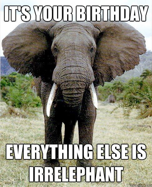 Its Your Birthday Funny Elephant Meme funny elephant askideas com