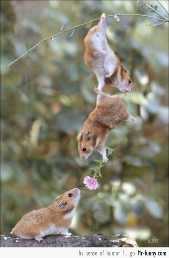 Cute Love Is Everywhere Funny Nature Animal Askideascom 27 Very Best Funny Nature Pictures