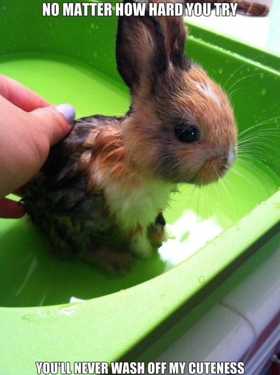 Cute Animals Pictures With Quotes: 25 Very Funny Rabbit Pictures