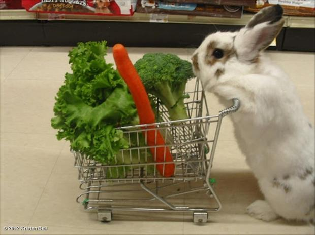 rabbit shopping funny picture