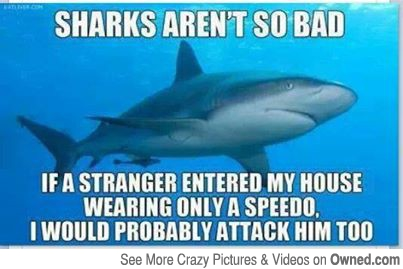 20 Funny Shark Pictures