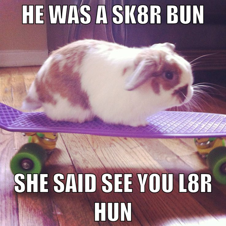 25 Very Funny Rabbit Pictures