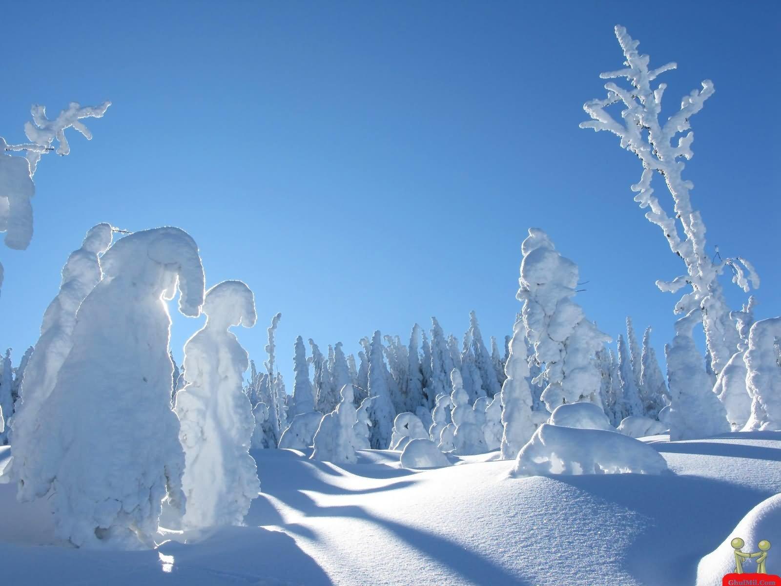 Snow Tree Funny Nature