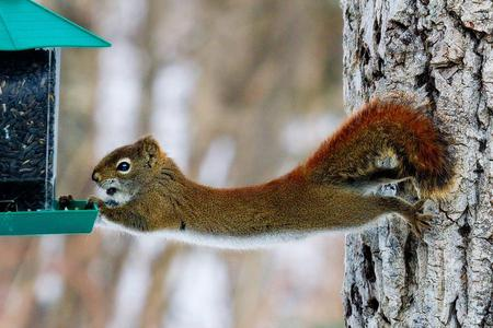 Squirrel Hanging Funny Nature Picture