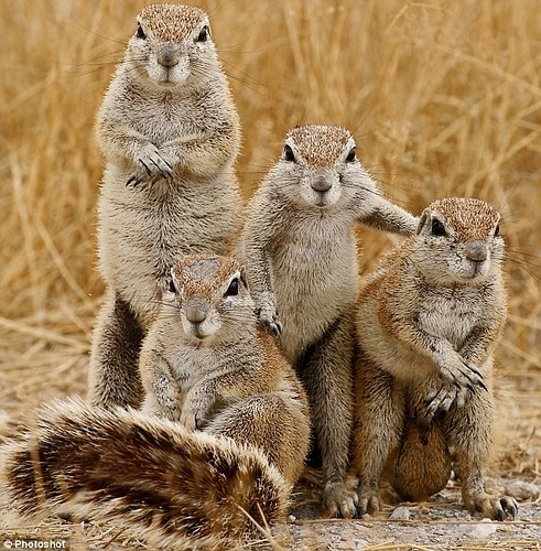 Squirrels Funny Nature Family