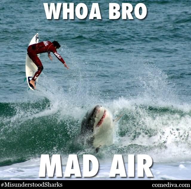 When It Is Shark Week Funny Shark Gif