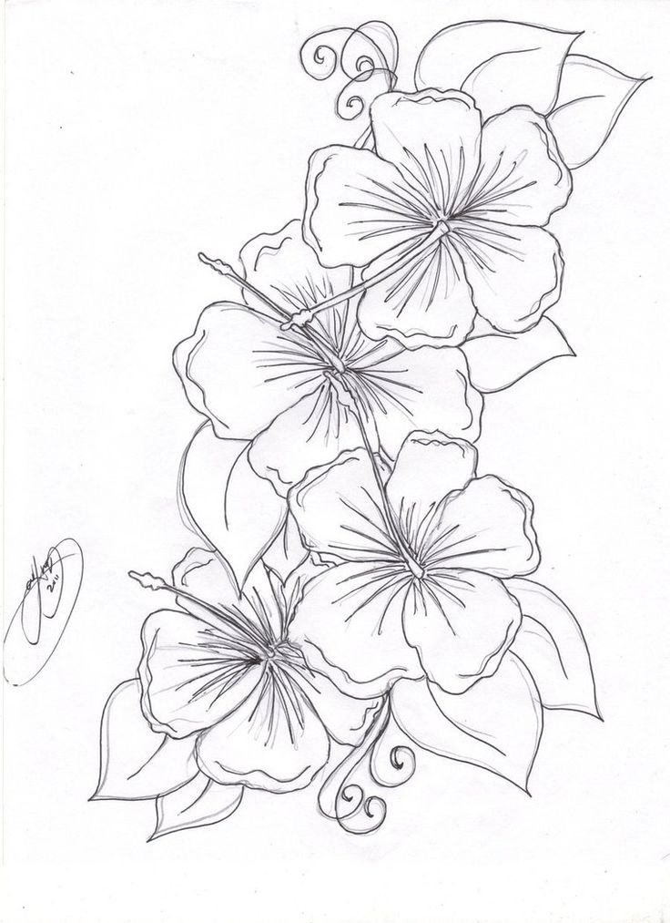 Black Four Hibiscus With Leaves Tattoo Stencil By Manic ...