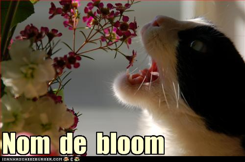 cat eating flowers funny picture