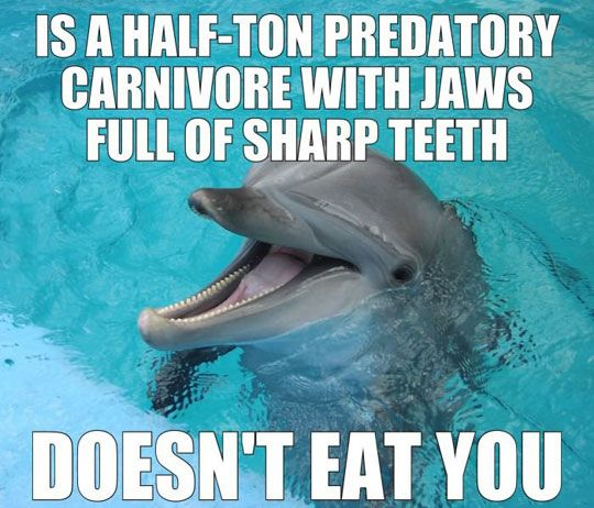 Doesn't Eat You Funny Dolphin Meme