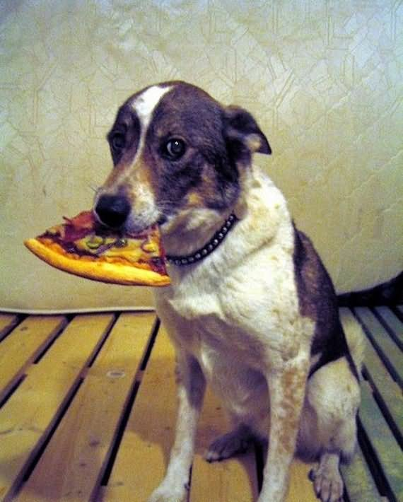 Dog Eating Pizza Funny Image