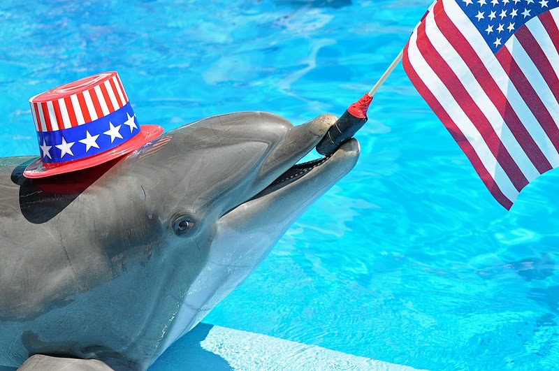 Dolphin In Hat And With American Flag Funny Wallpaper
