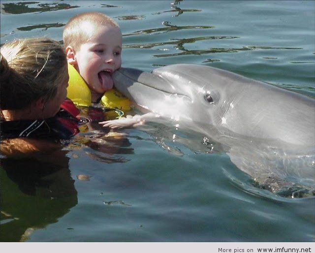 27 funny dolphin pictures