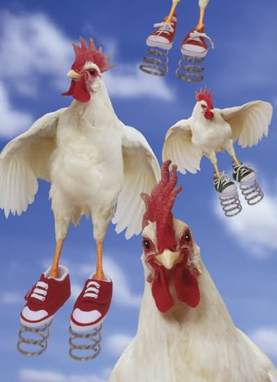 Rooster Wearing Tennis Shoes