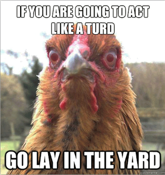 Funny chicken memes - photo#8