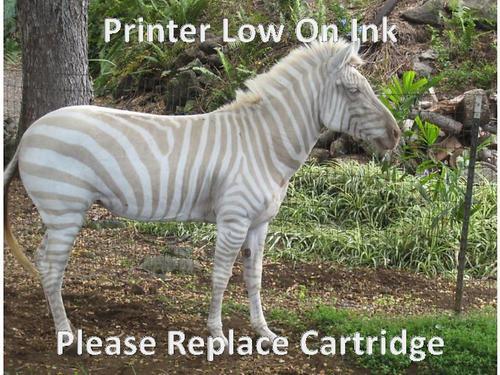 Funny Zebra Meme : Most funny zebra pictures