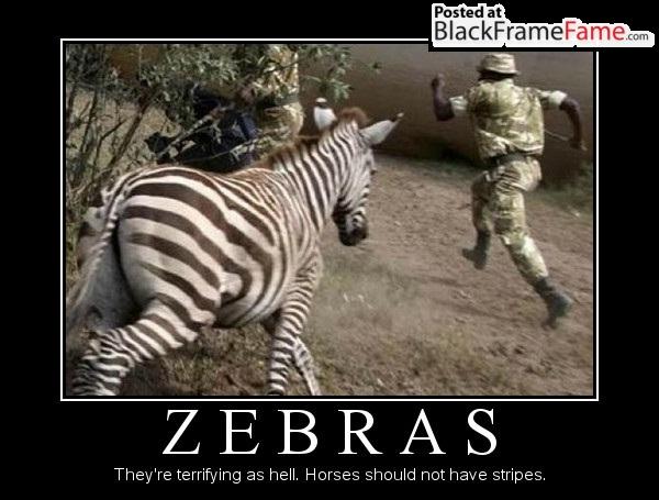 Funny Zebra Meme : Why do zebras hate coloring books funny zebra meme
