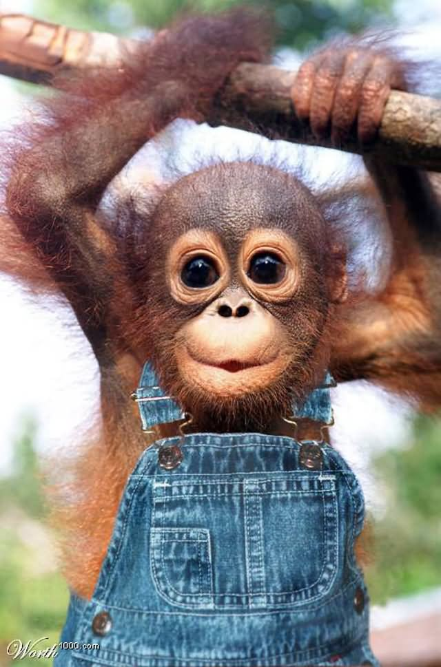 baby monkey in dress funny picture