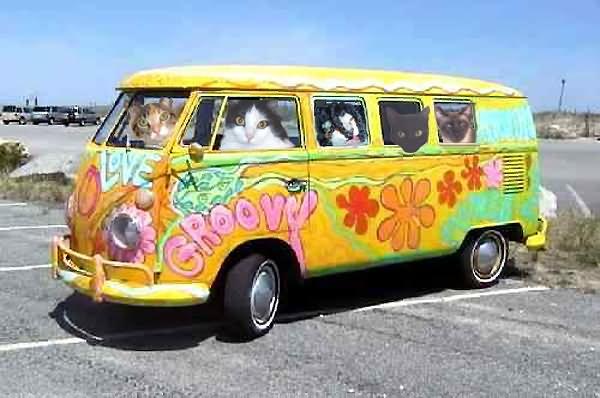 funny van pictures