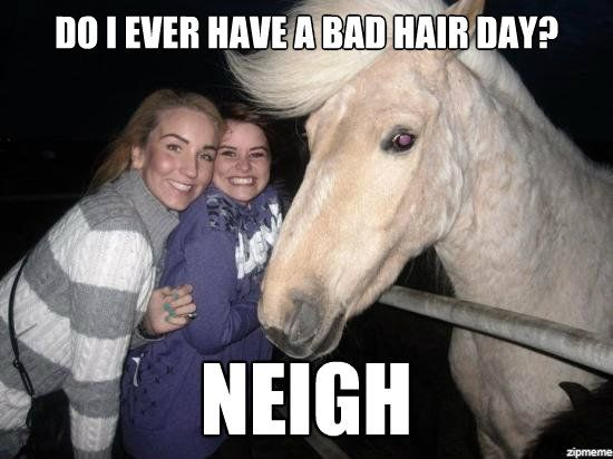 Bad Day Meme Funny : Do i ever have a bad hair day funny horse meme