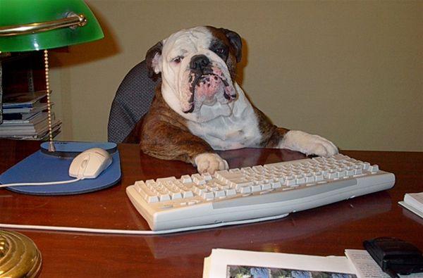 Image result for old dog computer
