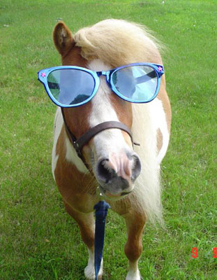 Funny Horse With Sunglasses