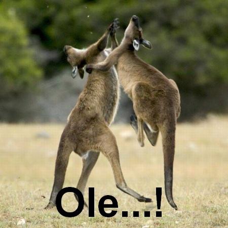 Funny-Kangaroo-Couple-Dancing-Picture.jpg