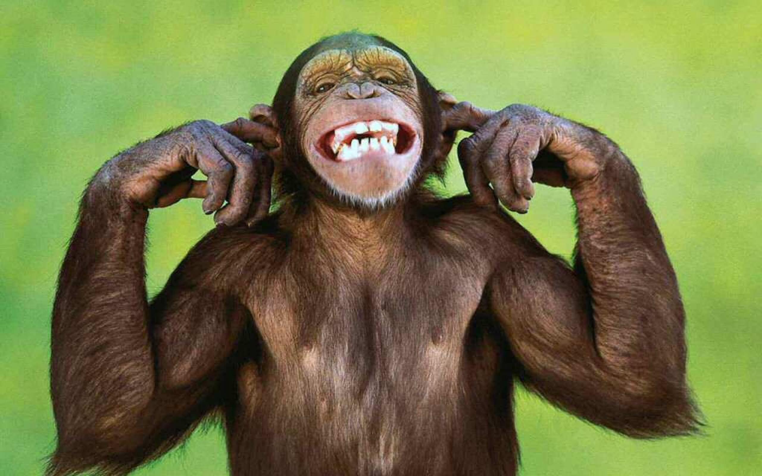 Funny-Monkey-Fingers-In-Ears.jpg
