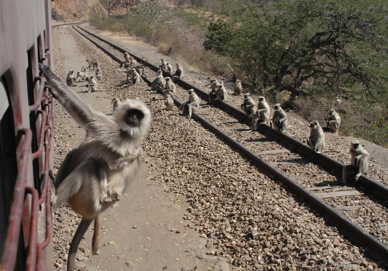 12 Most Funny Monkey Pictures